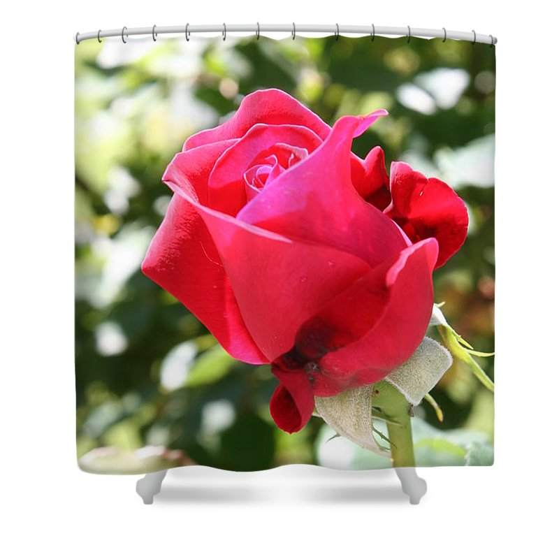 Rose Shower Curtain featuring the photograph Love In Red by Christiane Schulze Art And Photography
