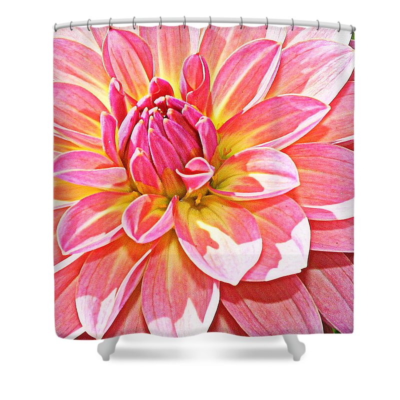 Dahlia Shower Curtain featuring the photograph Lovely In Pink - Dahlia by Dora Sofia Caputo Photographic Design and Fine Art