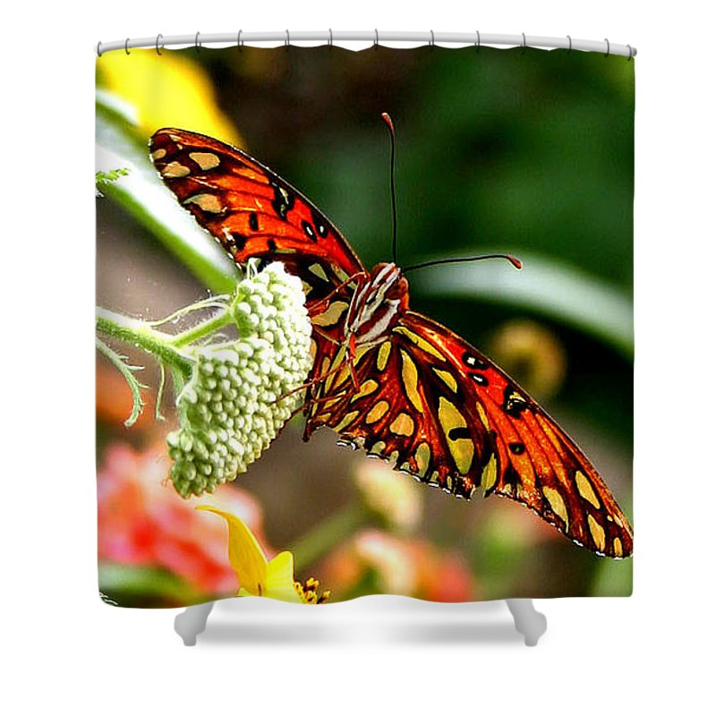 Butterfly Shower Curtain featuring the photograph Lovely by Mac Kenney