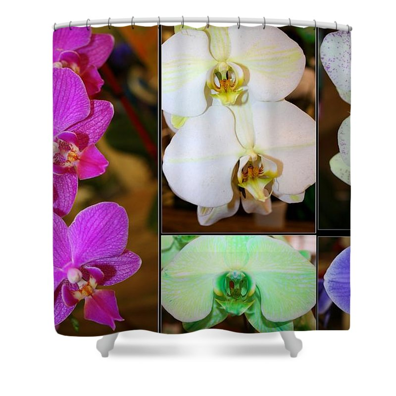 Orchid Flowers Shower Curtain featuring the photograph Lovely Orchids - A Collage by Dora Sofia Caputo Photographic Design and Fine Art