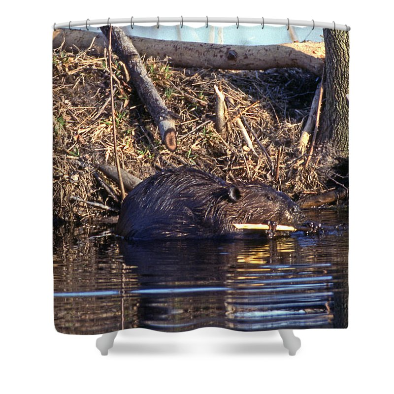 Nature Shower Curtain featuring the photograph Lunch At The Lodge by Skip Willits