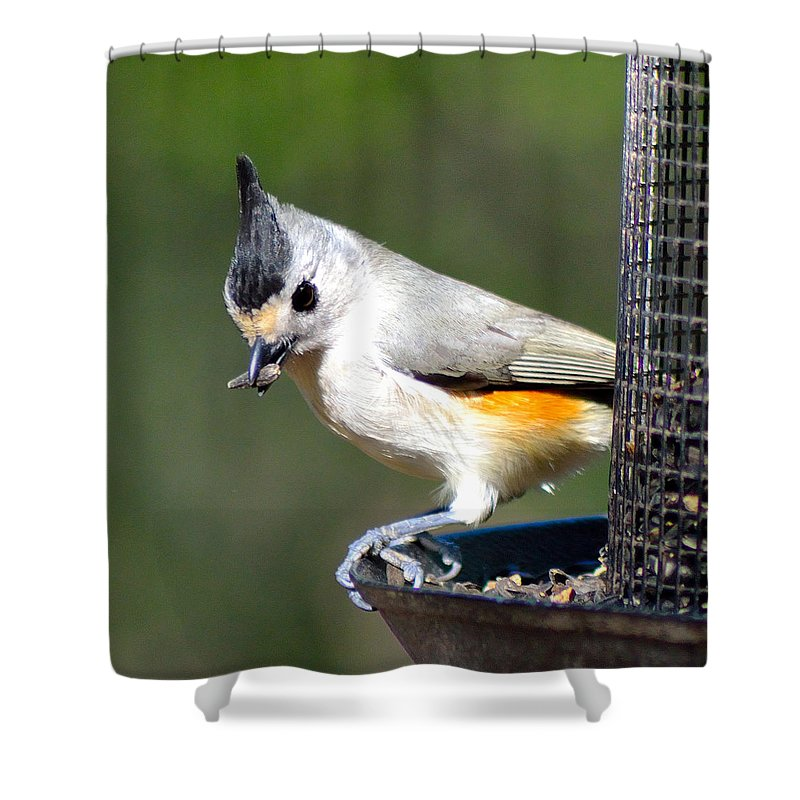 Small Birds Shower Curtain featuring the photograph Lunch Time by Shannon Harrington