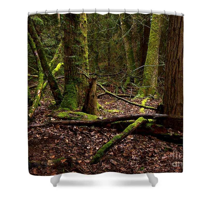 Forest Shower Curtain featuring the photograph Lush Green Forest by Mary Mikawoz