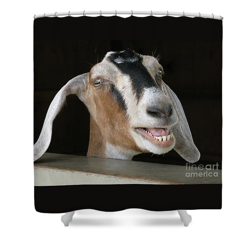 Goat Shower Curtain featuring the photograph Maa-aaa by Ann Horn