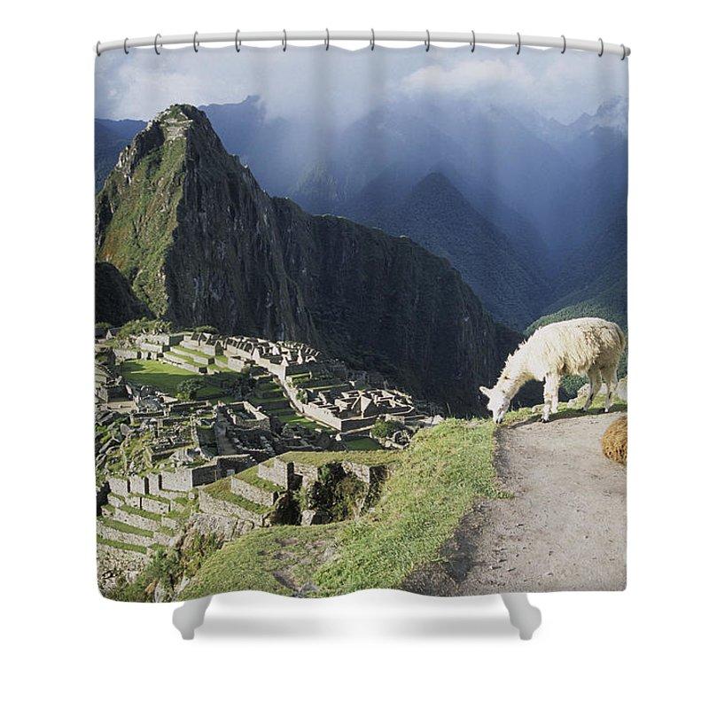 Machu Picchu Shower Curtain featuring the photograph Machu Picchu And Llamas by James Brunker
