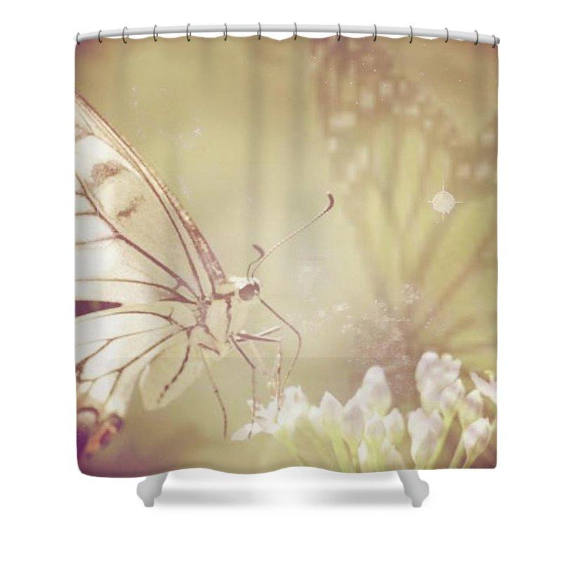 Magical Butterflies Shower Curtain Featuring The Photograph
