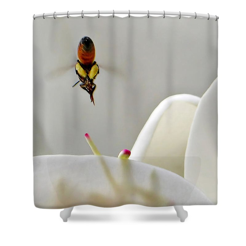 Bee Shower Curtain featuring the photograph Magnolia Bee Dive by Jennie Breeze