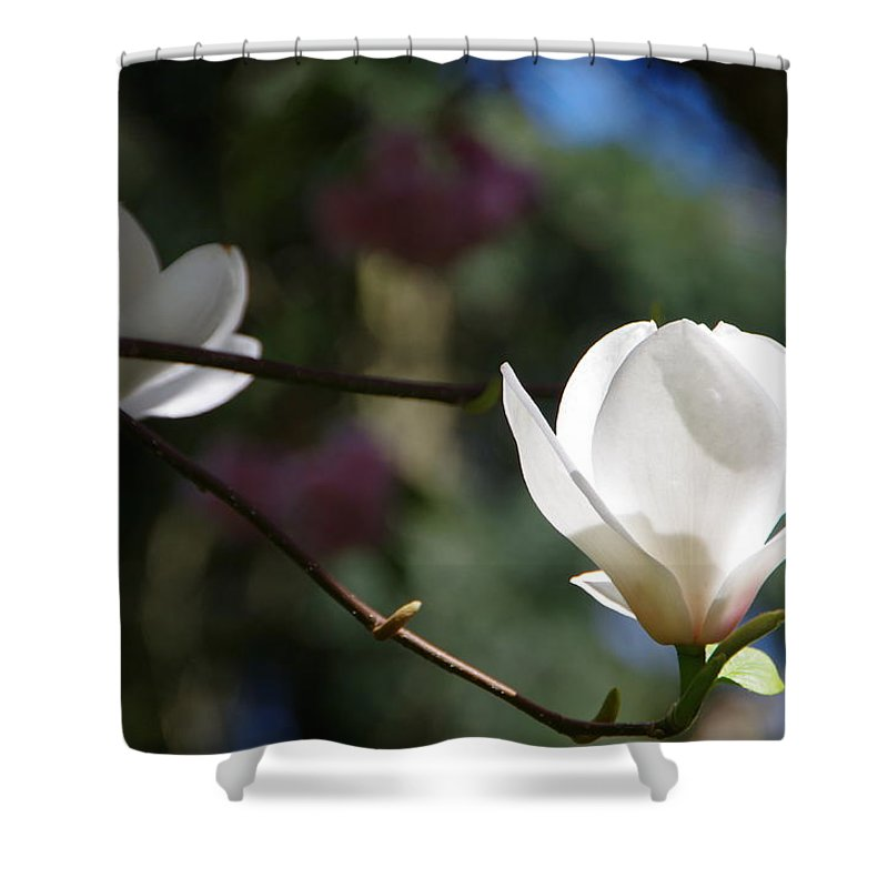 Magnolia Shower Curtain featuring the photograph Magnolia Blossoms by Marilyn Wilson