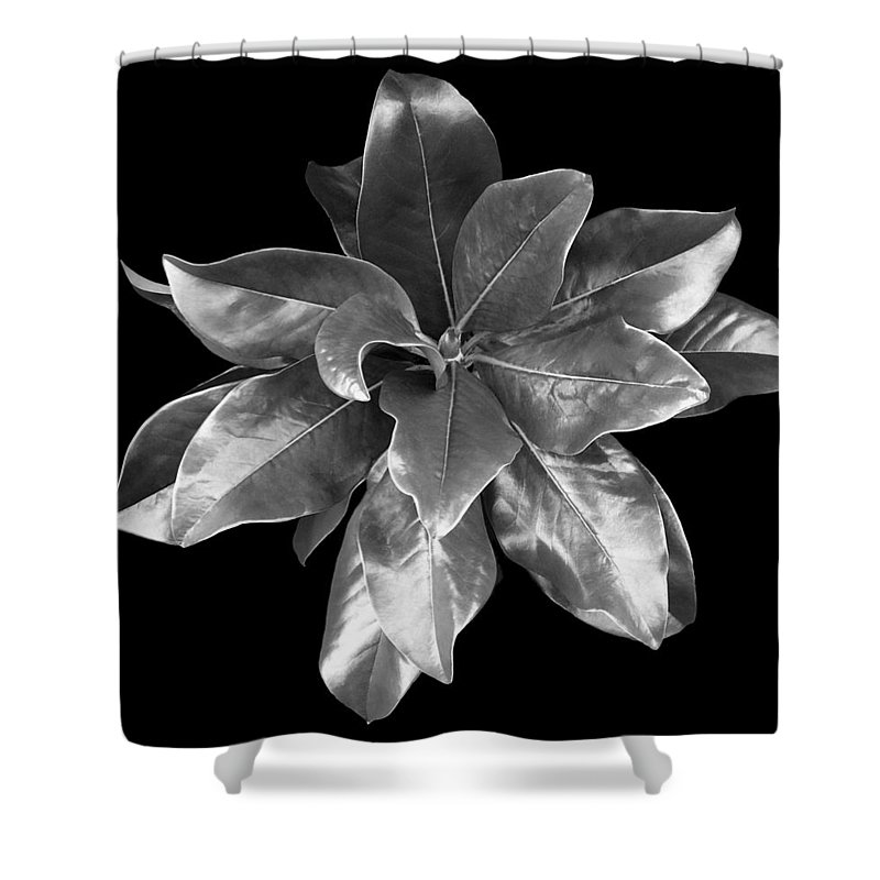 Magnolia Shower Curtain featuring the photograph Magnolia Tree Leaves by Marilyn Hunt