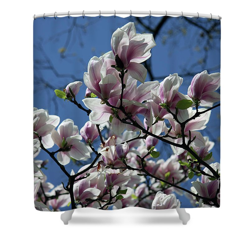 Magnolia Shower Curtain featuring the photograph Magnolia Twig by Christiane Schulze Art And Photography
