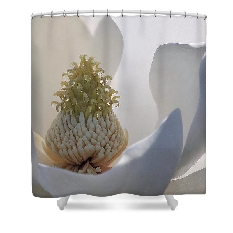 Magnolia Shower Curtain featuring the photograph Magnolia Unfurled by Rachel Kaufmann
