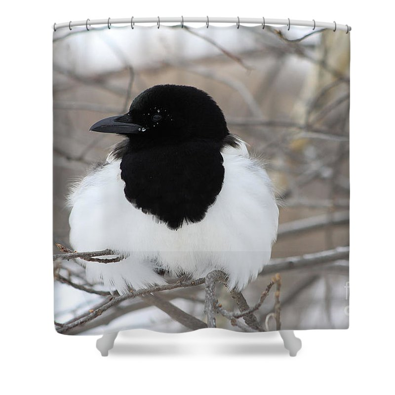 Bird Shower Curtain featuring the photograph Magpie Profile by Alyce Taylor