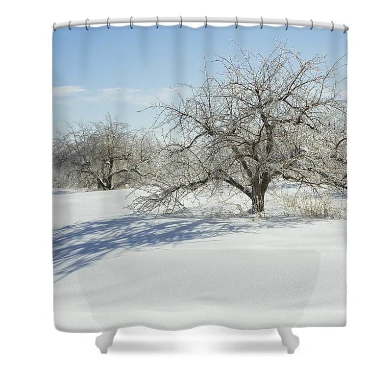 Apple Shower Curtain featuring the photograph Maine Apple Trees Covered In Ice And Snow by Keith Webber Jr