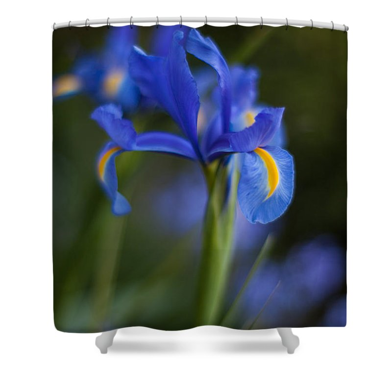 Iris Shower Curtain featuring the photograph Majestic Blue Iris by Mike Reid