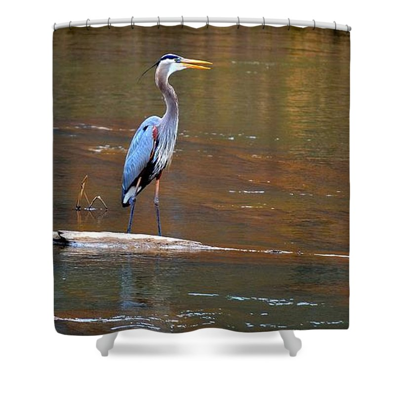 Heron Shower Curtain featuring the photograph Majestic Heron by Tara Potts