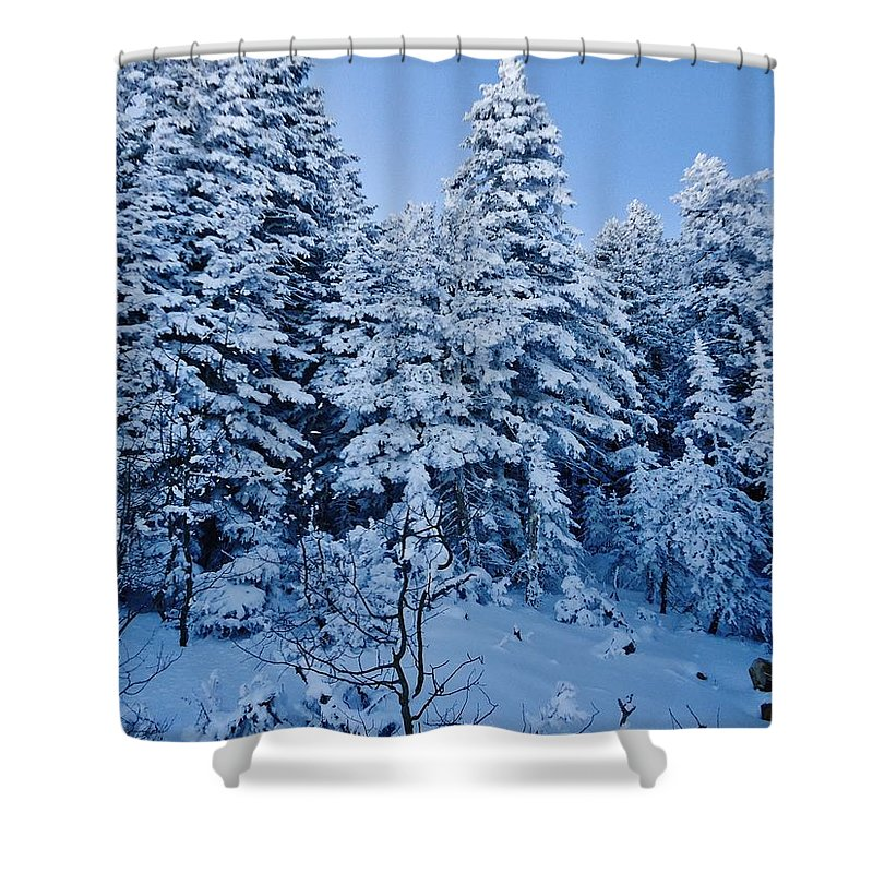 Evergreens Shower Curtain featuring the photograph Majestic Winter Wonderland by Lois  Rivera