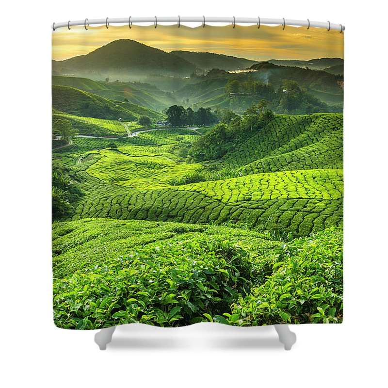 Cameron Highlands Shower Curtain featuring the photograph Malaysia, Pahang, Cameron Highlands by Cescassawin