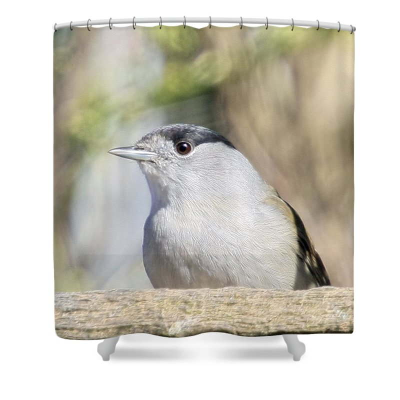 Bird Shower Curtain featuring the photograph Male Black Cap by Terri Waters