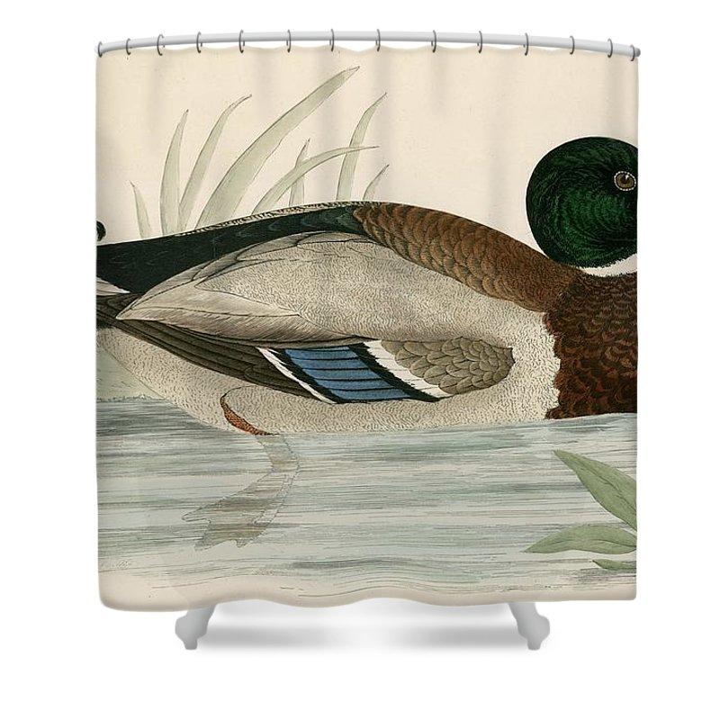 Mallard Shower Curtain For Sale By Beverley R Morris