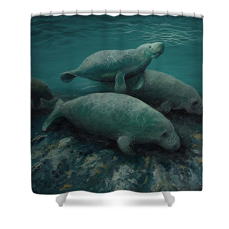 Manatees See Mammal Wildlife Endangered Ocean Animals Sea Life Shower Curtain featuring the painting Manatees by Mary Zins