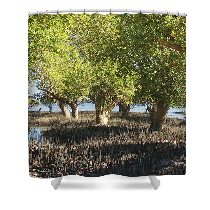Africa Shower Curtain featuring the photograph mangroves Madagascar 3 by Rudi Prott