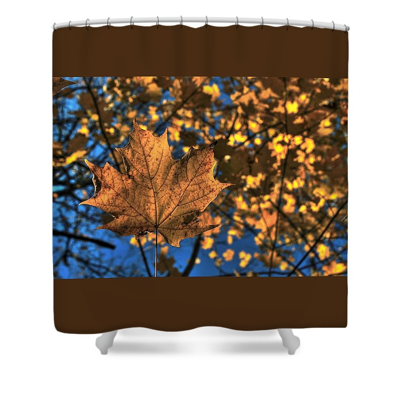 Maple Leaf Shower Curtain featuring the photograph Maple Leaf Still Standing by Karl Anderson