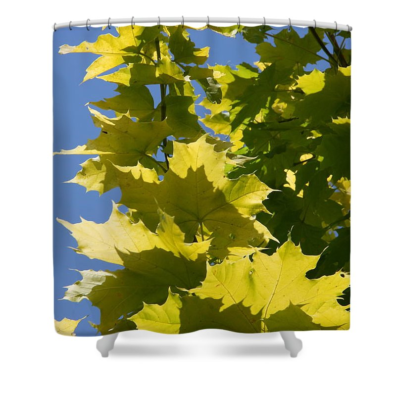 Maple Leaves Shower Curtain featuring the photograph Maple Leaves by Christiane Schulze Art And Photography