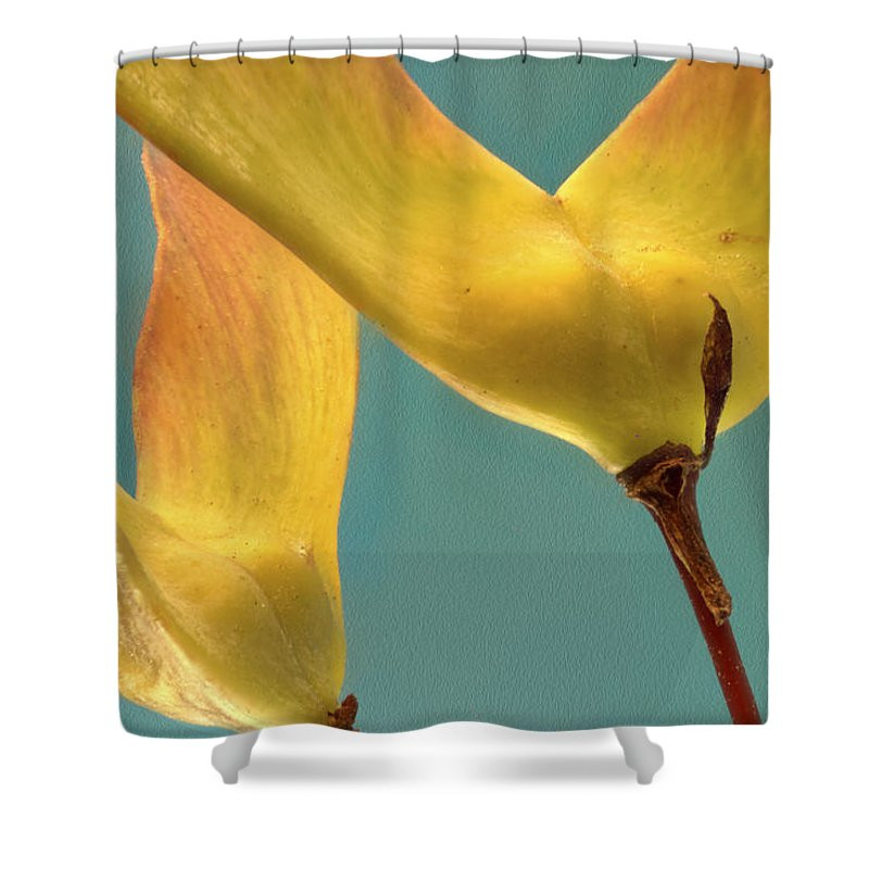 Macro Shower Curtain featuring the photograph Maple Seed Pods by Jean Noren
