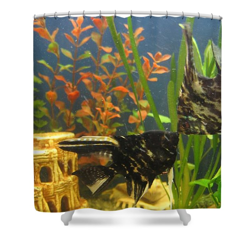 Marble Angelfish Shower Curtain featuring the photograph Marble Angelfish Kisses by Zina Stromberg