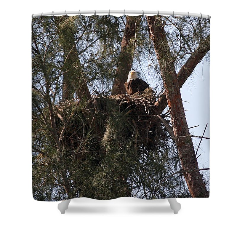 Naples Shower Curtain featuring the photograph Marco Eagle - Protecting Its Nest by Ronald Reid