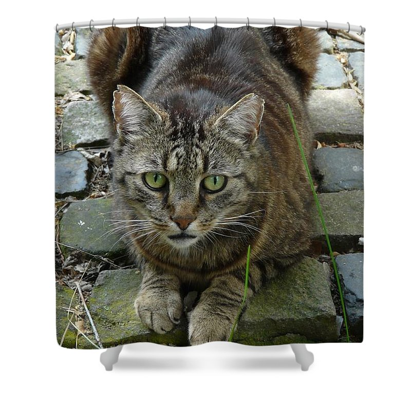Cat Shower Curtain featuring the photograph Marco by Valerie Ornstein