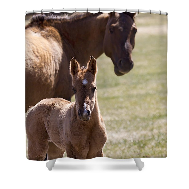Horse Shower Curtain featuring the photograph Mare And Foal  #0659 by J L Woody Wooden