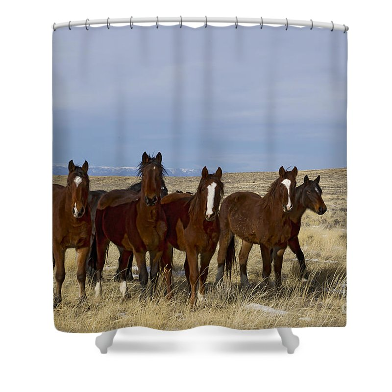 Horses Shower Curtain featuring the photograph Mares  #0844 by J L Woody Wooden