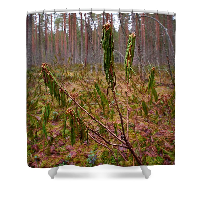 Finland Shower Curtain featuring the photograph Marsh Labrador Tea After Winter by Jouko Lehto