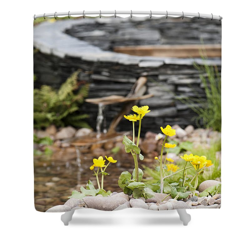 April Shower Curtain featuring the photograph Marsh Marigolds by Anne Gilbert