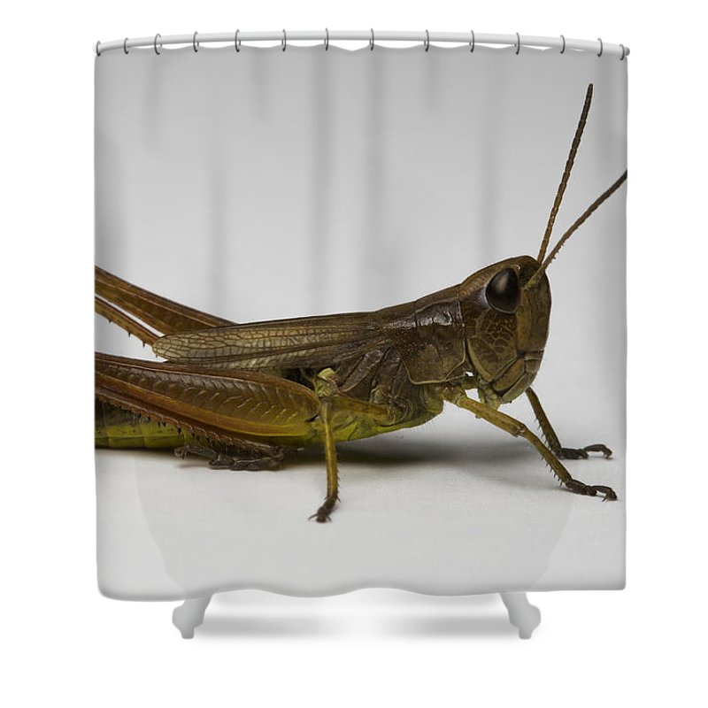 Bug Shower Curtain featuring the photograph Marsh Meadow Grasshopper by Terry Leasa