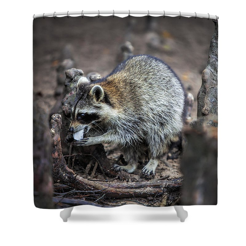 Raccoon Shower Curtain featuring the photograph Marshmallow Muncher by Diana Powell