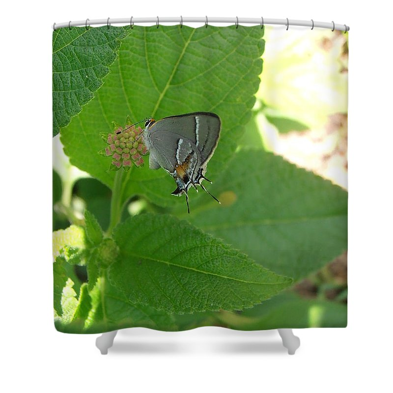 Butterfly Shower Curtain featuring the photograph Martial Scrub Hairstreak Butterfly by Kimberly Perry
