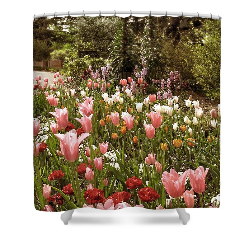 Seasonal Shower Curtain featuring the photograph May Tulips by Jessica Jenney