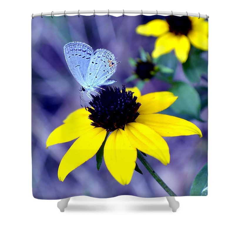 Butterfly Shower Curtain featuring the photograph Mazarine Blue by Deena Stoddard
