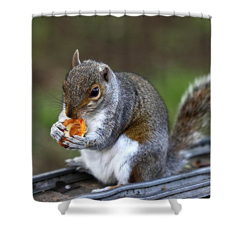 Squirrel Shower Curtain featuring the photograph Meals On Rails by James Brunker