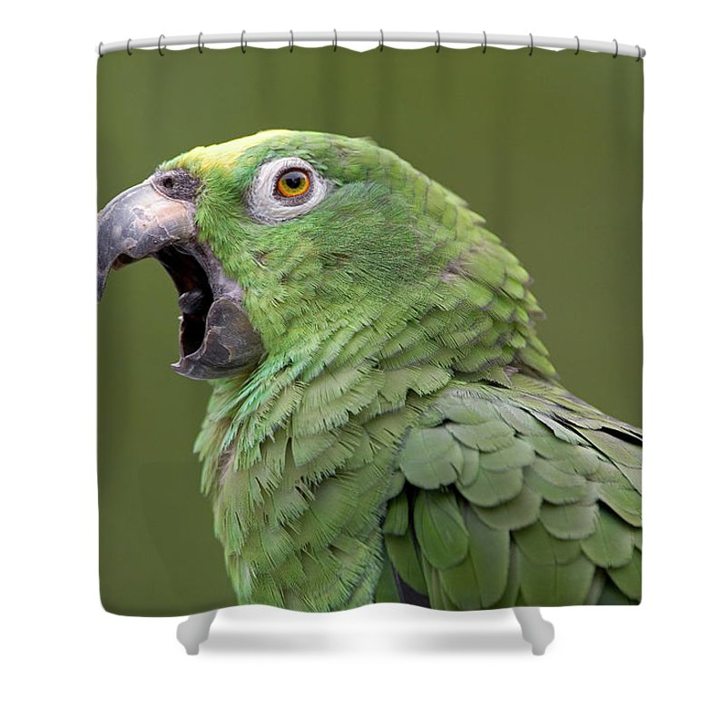 00762511 Shower Curtain featuring the photograph Mealy Parrot Amazona Farinosa Calling by Ingo Arndt