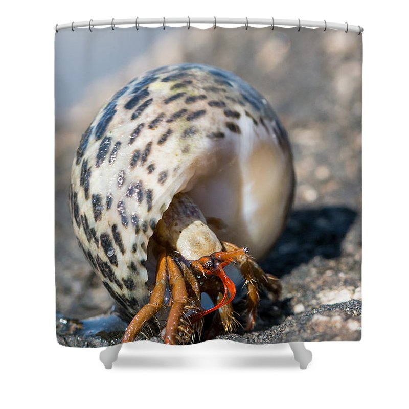 Crabs Shower Curtain featuring the photograph Mediterranean Hermit Crab by Jivko Nakev
