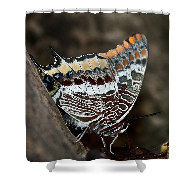 Butterfly Shower Curtain featuring the photograph African Spirit by Kamen Ruskov