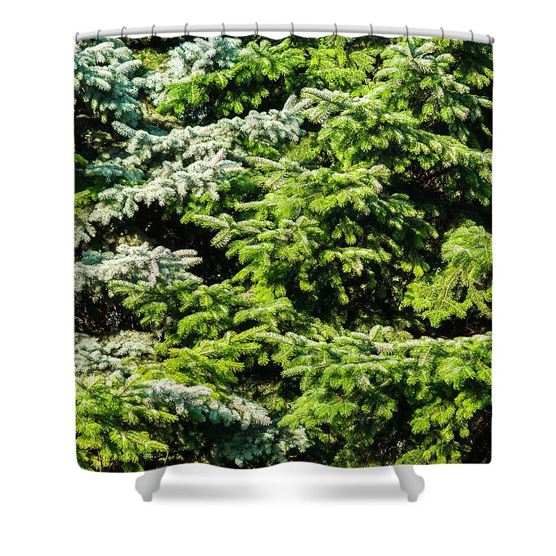 Backdrop Shower Curtain featuring the photograph Merry Christmas by Alexander Senin