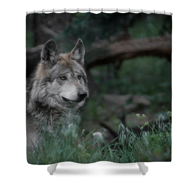 Wolf Shower Curtain featuring the digital art Mexican Grey Wolf by Ernie Echols