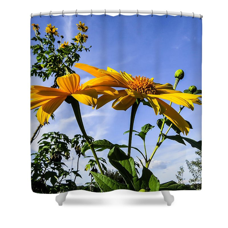 Sunflower Shower Curtain featuring the photograph Mexican Sunflower by Zina Stromberg