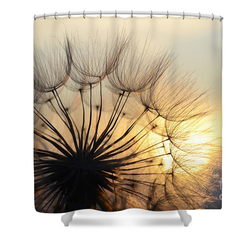 Sunset Shower Curtain featuring the photograph Milkweed 2 by Bob Christopher