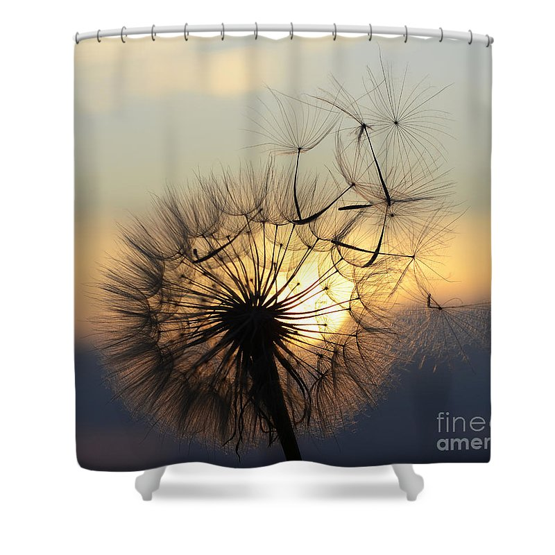 Seeds Shower Curtain featuring the photograph Milkweed 5 by Bob Christopher