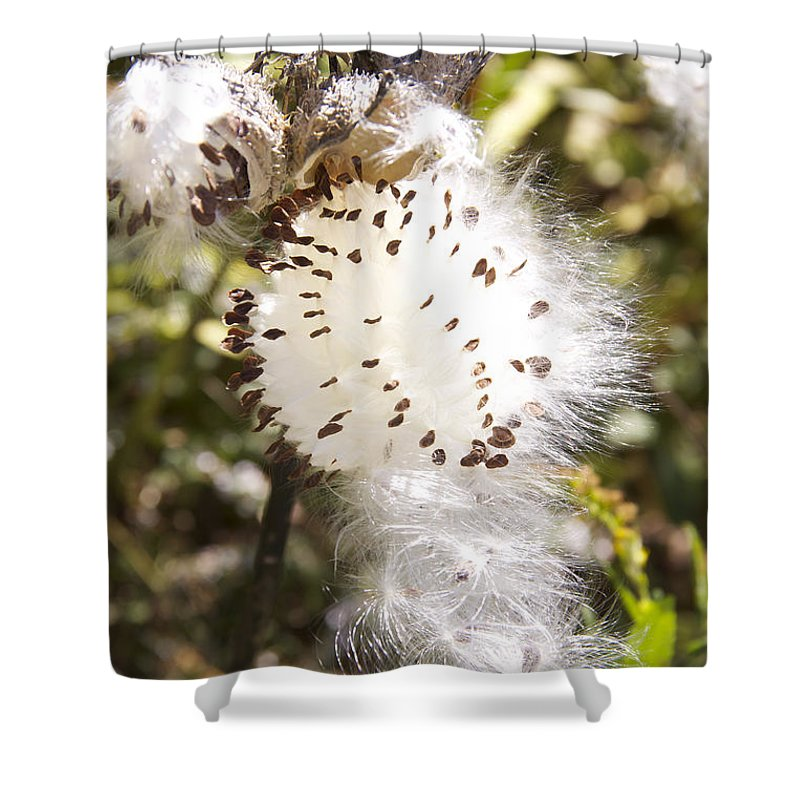 Milkweed Seeds Shower Curtain featuring the photograph Milkweed Seeds 3 by Michael Mooney